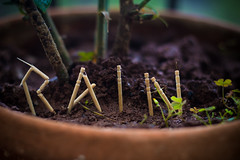 rain (neerajkhare) Tags: nature rain toothpicks greenery
