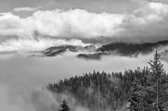 Hurricane Ridge [Explored July 28 2016] (aaronbrethorst) Tags: fog hurricaneridge landscape mountain olympicnationalpark olympicpeninsula pacificnorthwest portangeles trees vista washington