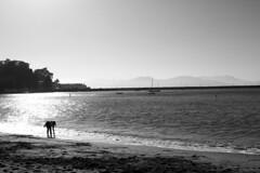 The Bay (CHooks1231) Tags: sf san fran sanfransisco ca california bay area bayarea golden gate goldengate bridge water sand shells fog smog boats peir warf docks sails crabs sun reflection canon 7d mkii 24105f4l