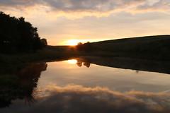Sunrise At Little Barbrook (Derbyshire Harrier) Tags: reflections sunrise mist littlebarbrook silhouette summer silverbirch rspb nationaltrust peakdistrict peakpark derbyshire pool barbrook glow dawn reeds
