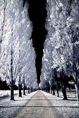 All in a row 1 Rechelieu park (photoautomotive) Tags: france french europe avenue trees tree grass infrared ir sky trunk avenueoftrees cardinalrechelieu 16thcentury frenchforeignsecretary outside shadows shadow path park