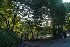 SDQ_3383lr (yoshitoshi ABe) Tags: 20160904 吉祥寺 井の頭公園 sdquattro sigma15mmf28exdgdiagonalfisheye