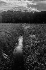 (salparadise666) Tags: voigtlnder avus 6x9 anastigmat 105mm niedersachsen germany hannover region bach landscape natur kontrast calenberger land