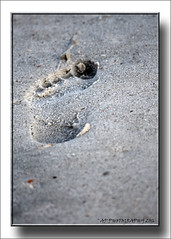 One small step (prendergasttony) Tags: elements sand sea beach d7200 nikon outdoors florida america usa