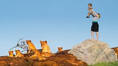 Lioness_cubs (VirgileCynthia) Tags: lionpride lionessandcubs masimaranationalreserve maasimaragamereserve olaromotorogiconservancy maraplainscamp southwestkenya africa wildanimals dangerousanimals safari darkcontinent easternafrica kandaceheimerphotography kandaceheimer texasphotographer kandfotocom kandfotophotography photography kenya