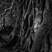 Tree Root With Deity head statue