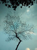 Re-Born 01 (MH Photograaphy) Tags: outdoor tree winter plant moon leaf reborn skyline blue cloudy dhaka gulshan bangladesh samsung st500 peace ngc