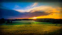 Jimmy Westerberg Photography (jimmy.westerberg) Tags: summer fields sky sunset landscape horses grass green blue saturation saturated beautiful sweden explore outdoor serene shore field dusk cloud bright sunshine evening