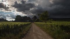 Sun in the Clouds (MrBlackSun) Tags: chateau aloxe corton aloxecorton bourgogne burgundy france wine vin wineyard vigneron nikon d810 nikond810 vineyard landscape scenery