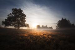 Bkk-fennsk, Nagy-mez (A piece of nature.) Tags: landscape fog kd pra mist tjkp hajnal
