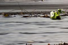 Lago di Villetta Barrea (immagini-in-movimento) Tags: lost freedom child photography fotografia timelapse natura fiori fioritura notte night nature flowers flower milkway vialattea via lattea sunrise alba astrofotografia red blue green live life verde blu castelluccio di norcia video