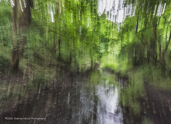 Forest Impression 3 (anicoll41) Tags: cameramovement horizontal stream trees seatonsluice northumberland england gb