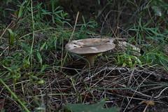 DSC_0677 (caudlewl) Tags: mcculloughpark mushrooms mn