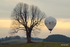 EBW 2013: Spter Heimkehrer (HITSCHKO) Tags: schweiz switzerland suisse ballon bern svizzera baum emmental heissluftballon einzelbaum svizra laubbaum ebw affoltern solitrbaum affolternimemmental emmentalerballonwoche ebw2013