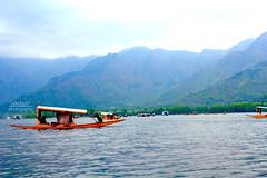 Shikara @ Dal Lake, Srinagar (rabidash*) Tags: travel india colour beautiful fantastic holidays flickr shot dash click srinagar jk rabi dallake rabindra rabidash rkdash rabidashphotography
