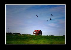 Landschap (Theo Kelderman) Tags: canon vogels huis dijk landschap theokeldermanphotography augustus2012 fietstochtdoorzuidhollandrichtingkinderdijk