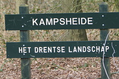 Kampsheide (willemsknol) Tags: trees bomen roodborst kampsheide drentslandschap willemsknol