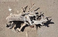 Wood, Indus Delta region, Sindh (Ameer Hamza) Tags: pakistan pakistani sind sindh ppa pakistaniphotographer ameerhamzaadhia pakistanitraveller ameerhamzaphotography