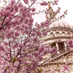 London Blossom (violinconcertono3) Tags: flowers tree london church nature architecture spring blossom seasonal cherryblossom stpaulscathedral fineartphotography londonist photographyprints londonphotographer 19sixty3 davidhendersonphotography