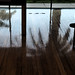A04463 / piazzoni mural room floor with palm reflections