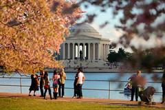 Washington DC Cherry Blossoms (Scott Fracasso Photography) Tags: trees tourism monument festival canon scott cherry photography dc washington memorial blossom basin jefferson tidal fracasso 5dmkiii