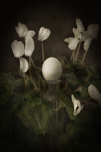 Still Life With cyclamen and an Egg