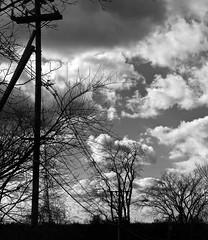 Stormy Silhouettes, Ward Hill MA (Boneil Photography) Tags: trees silhouette ma prime pentax takumar massachusetts panasonic m42 manualfocus 50mmf14 haverhill screwmount supertakumar m43 wardhill microfourthirds boneilphotography dmcg10 brendanoneil