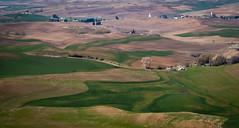 Palouse grain fields patchwork (kiowas) Tags: washington roadtrip april wa palouse easternwashington palousehills steptoebutte 2013 20130418img4585