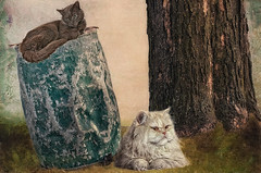 Cats Resting (jta1950) Tags: pet cats pets painterly cute texture cemetery grave animal cat feline chat tomb adorable gravestone cimetiere