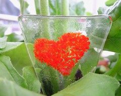 Fused Plant Decorations (14) (Glittering Prize - Trudi) Tags: plant glass decoration marker trudi fused britcraft glitteirngprize
