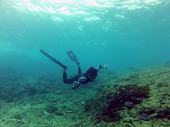 ~ (acionk arifin) Tags: life indonesia underwater levitation wave adventure clownfish freediving orca traveling underworld yesterday falco freedive cressi acionkarifin