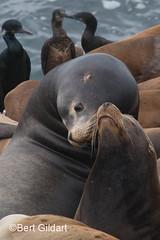 Seals (2 of 35)