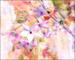 the essence of springtime (Sunnyvaledave) Tags: spring dove