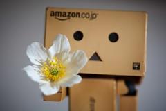 For You. (Gr@vity) Tags: flower canon blume f4 ai 200mm danbo micronikkor danboard 5dmarkiii 5dm3 revoltrech
