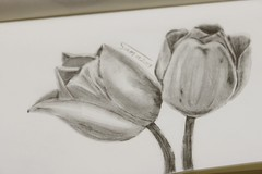 Tulip (Sama0s) Tags: flowers art pencil sketch drawing doodle artists tulip doodles drawn