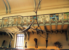 A Pterosaur In The The Gallery of Paleontology - Paris. (Jim Linwood) Tags: paris france museum fossil dinosaur paleontology prehistoric jardindesplantes pterosaur