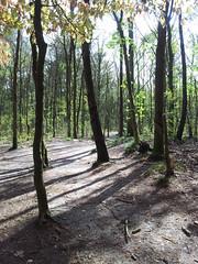 20130505_164415 (MelisaTG) Tags: cameraphone trees woods urbanwoods greenleafs