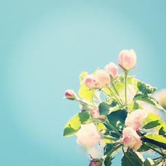 - pink flowers - (FRJ design&photography) Tags: flowers blue sky sun flower tree green fleur fleurs happy hope rising soleil leaf spring nice day vert jour bleu growth ciel jungle flowering jolie arbre printemps feuille heureux espoir croissance floraison lvation esprer