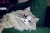 Cat firmness