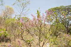 Chapada dos Veadeiros (Stella Pado) Tags: brasil gois alto paraso parque nacional da chapada dos veadeiros national park cerrado trilha hiking treeking natureza nature paisagem landscape