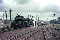 NZR 4-8-2 Ja Triple-Header Mercer, Nov 1965 (TJM2012) Tags: nzr res newzealandrailways northbritish mercer 482 ja 1283 1284 1285 1965