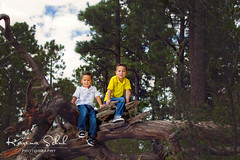 siblings (KarinaSchuh) Tags: alamogordo boys cloudcroft familyphotography forest individuals newmexico newmexicophotographer oterocounty outdoor outdoorphotographer outdoorportraiture portraiture trees babysister climbing dad familyoffive happyness mom siblings