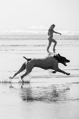 (RaminN) Tags: dog running oregon coast ocean cannon beach water