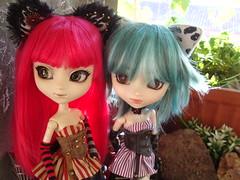 Mira que monos! - Steampunk cat girls (Lunalila1) Tags: doll groove junplaning handmade outfit cat neko pullip grell alison bendel steampunk cheshire fake prunella gwen barret