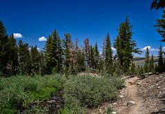 Time To Go Down (nebulous 1) Tags: skymeadow trail easternsierra sierranevada landscape nature trees blue sky clear clouds bushes nikon nebulous1 glene coldwatercreek