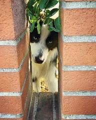 (Cristina Birri) Tags: cane dog muretto palmanova udine friuli