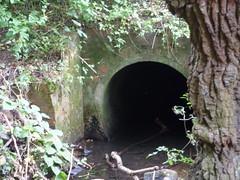 Moseley Bog - tunnel for a stream (ell brown) Tags: moseleybog shirecountrypark theshirecountrypark pensbyclose sarehole moseley birmingham westmidlands england unitedkingdom greatbritain joyswoodlocalnaturereserve jrrtolkien lordoftherings thehobbit thelordoftherings yardleywoodrd tree trees birminghamcitycouncil thewildlifetrust moseleybogandjoyswood stream tunnelforastream