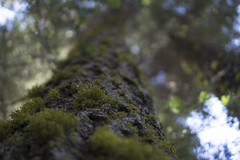 Mossy (evaxebra) Tags: