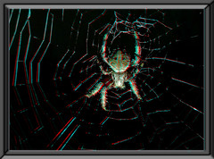 Nighttime Neoscona Crucifera, Spotted Orbweaver Spider - Anaglyph 3D (DarkOnus) Tags: pennsylvania buckscounty huawei mate8 cell phone 3d stereogram stereography stereo darkonus closeup macro nighttime neoscona crucifera spotted orbweaver spider night dark web arachnid orb weaver