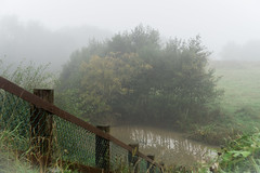 Foggy pond (darrenjcampbell) Tags: outdoors nature autumn trees fence pond fog